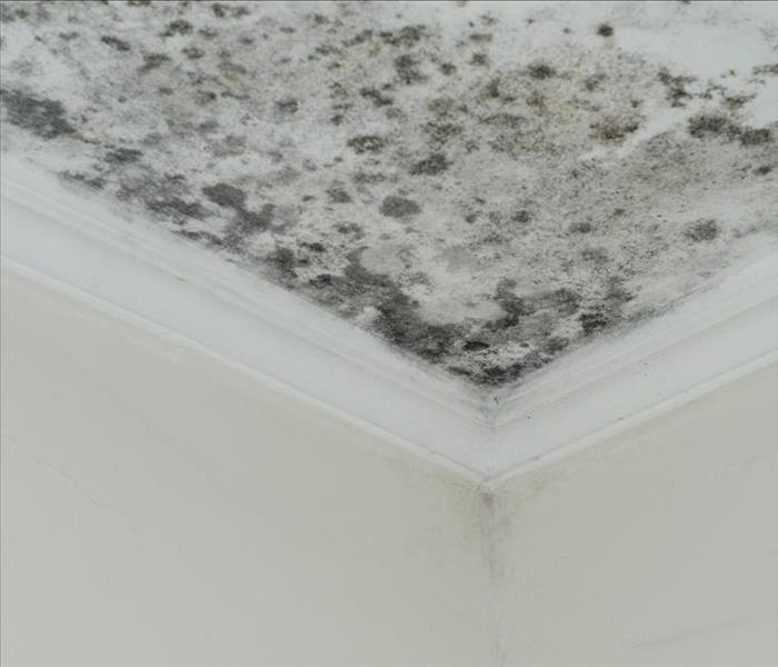 mold damage home